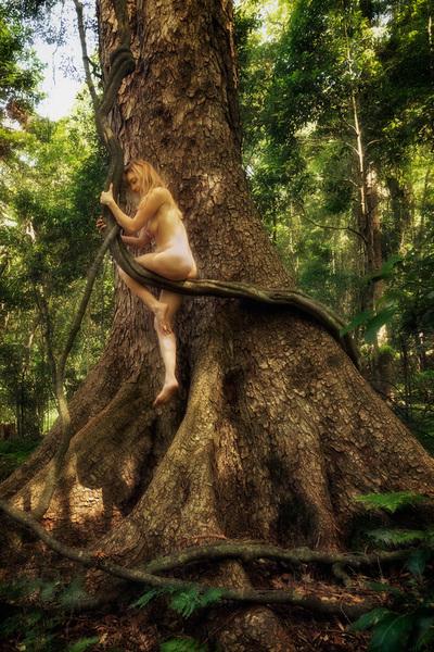 Treegirl Red Cedar Toona Ciliata Var Australis