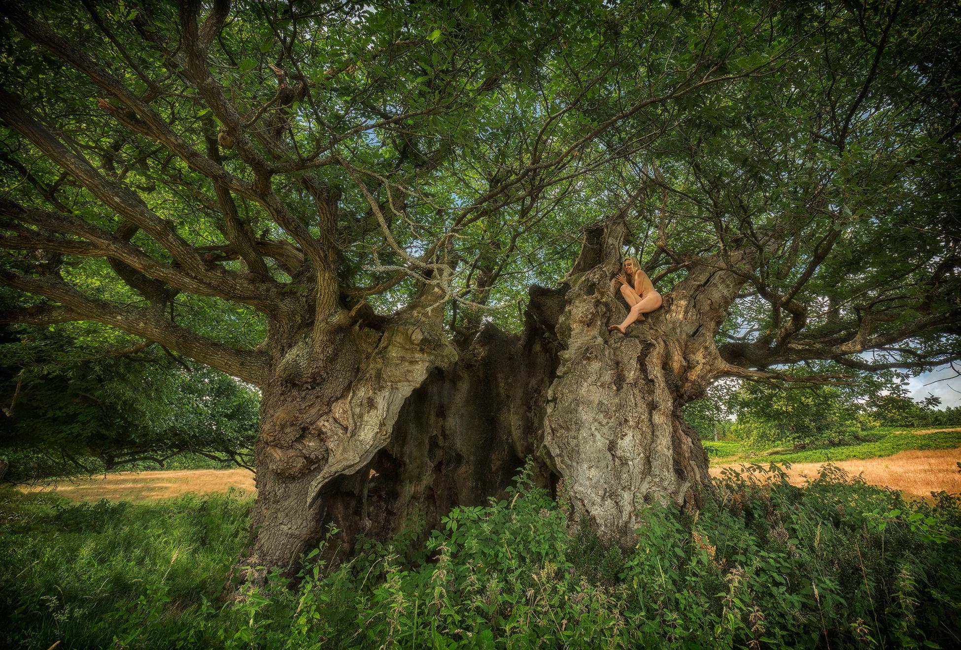 Queen Elizabeth Oak Habitat TreeGirl Nude Fine Art Prints